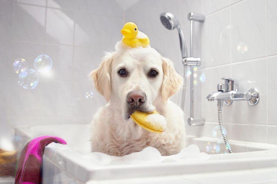 Grooming & Shampoo