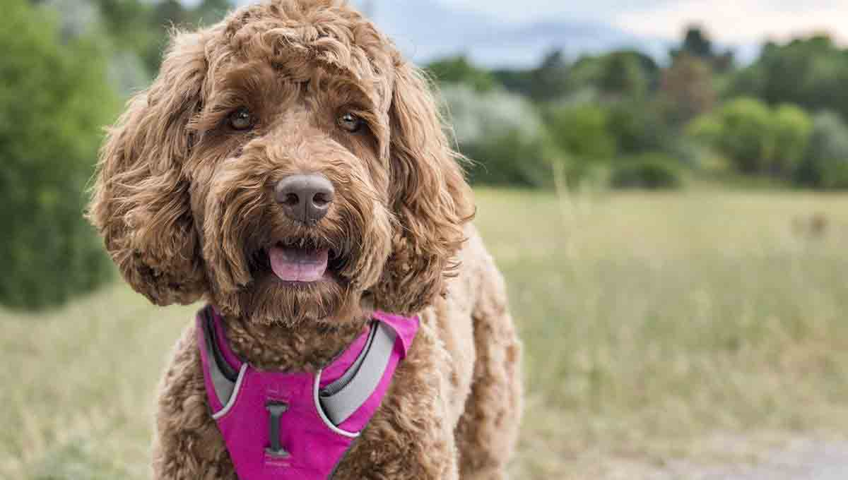 a-guide-to-no-pull-dog-harnesses-choosing-the-best-for-your-furry-friend